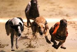 Dog Racing Newcastle