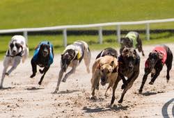 Greyhound Racing Towcester