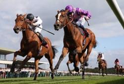 Horse Racing Haydock