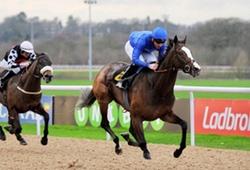 Wolverhampton Horse Races